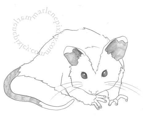 drawing   Marlene Pixley