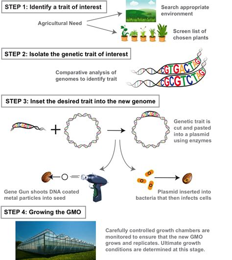 how is a how to make a gmo science in the news