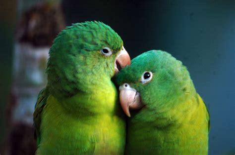imagenes animales que respiran por la traquea los fieles del reino animal el nuevo diario
