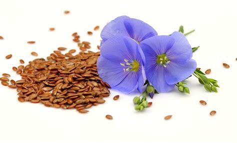 Seed Giveaway - omega crunch flax seed giveaway
