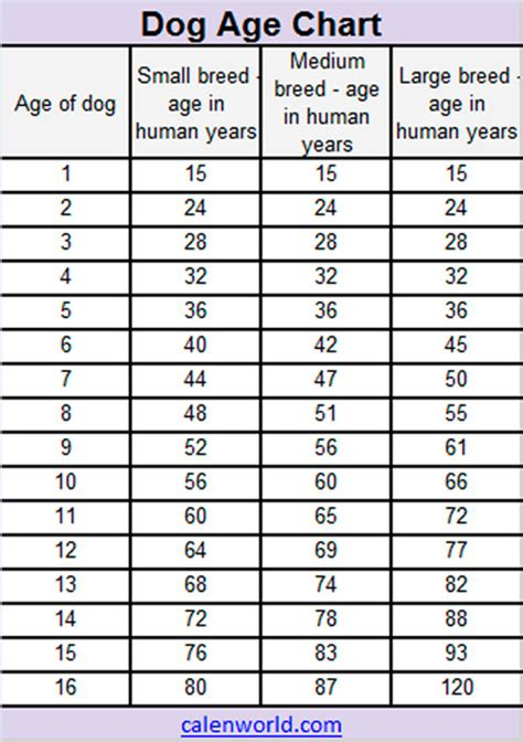 what age can dogs puppies age calendar age chart age converter