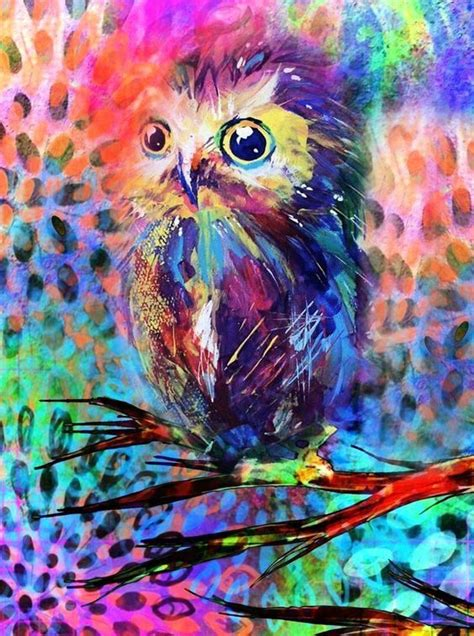 colorful owl wijze uilen editor owl and i am