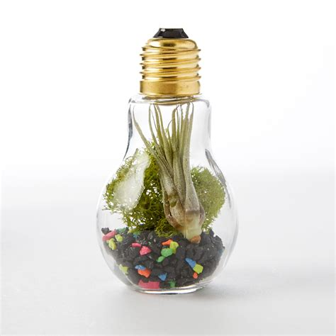 Light Bulb Terrarium by Diy Light Bulb Terrarium Adorable Home