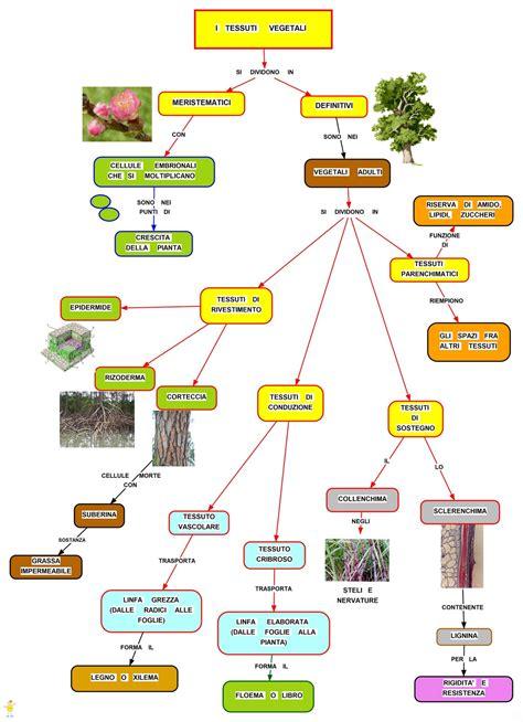 alimenti di origine minerale mappa concettuale tessuto vegetali