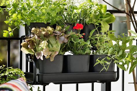 piante da terrazzo pieno sole 22 piante per riparare un terrazzo in pieno sole casafacile