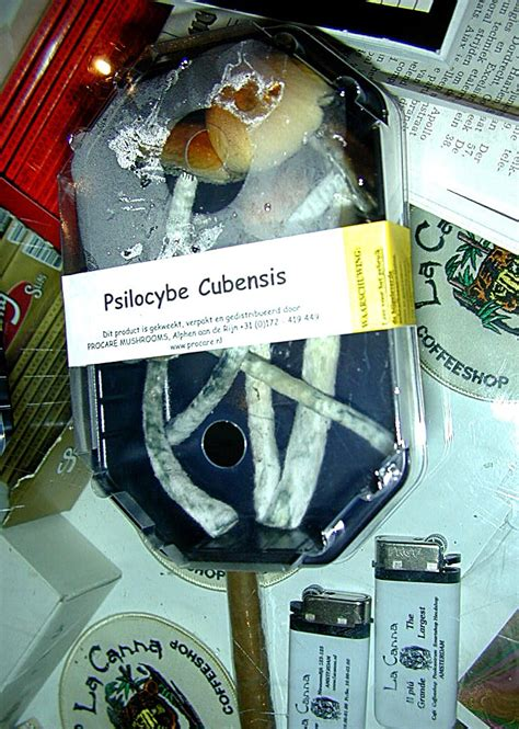 scow etymology psilocybe cubensis