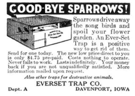 House Sparrow Trap Plans House Sparrows Bluebirdnut