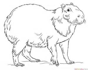 To Draw Coloring Pages How To Draw A Capybara Step By Step Drawing Tutorials by To Draw Coloring Pages