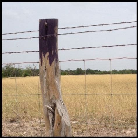 purple paint law gc58ycx purple posts traditional cache in texas united
