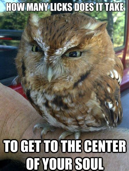 Who Owl Meme - owl meme funny pictures quotes memes jokes