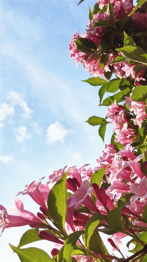 bloemen achter bloesems bloemen achtergronden telefoon mevrouwmiauw nl