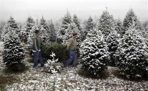 28 best christmas tree farm cleveland christmas