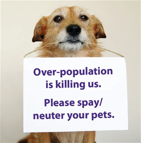 neutering an the many benefits of spaying or neutering your pet the pet lover s guide