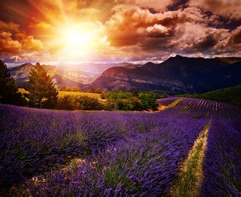 wann blüht der lavendel in frankreich bl 252 tezeit vom lavendel 187 in deutschland und anderen l 228 ndern