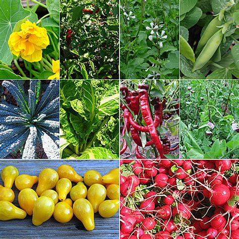container gardening seeds edible container garden seed collection