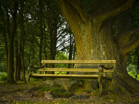 tree with bench bench under oak tree sfkitt s gallery gallery lumix