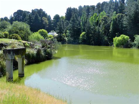 Wilson Botanical Gardens Top 10 Things To Do At Wilson Botanic Park Melbourne