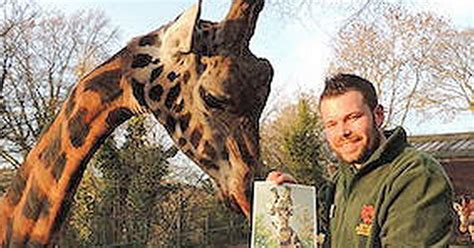 Birmingham Mail Section by Dudley Zoo S Handsome Rothschild Giraffe Is Captured On
