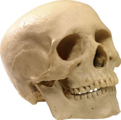 Skeleton Skulls Png Images Free Download Skull On
