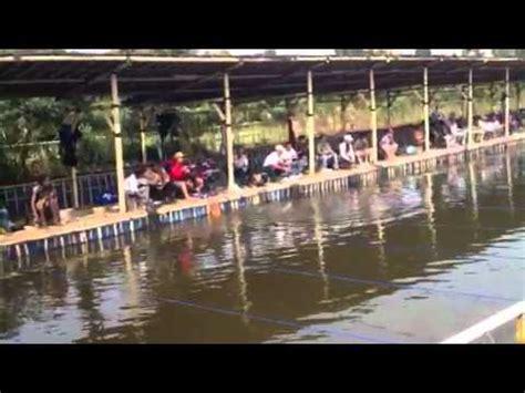 Bibit Ikan Bawal Kediri malvin mancing di pacet mp4 doovi