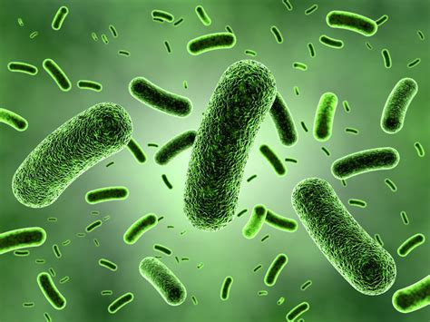 pengertian layout secara umum mengetahui definisi dan pengertian bakteri