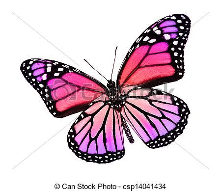 butterfly colors stock illustration color butterfly isolated on white