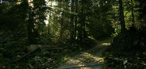 el bosque oscuro the caminos forestales