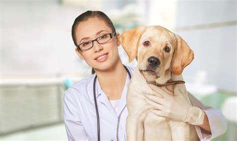 Miami County Veterinary Clinic   Veterinarian In Peru, IN