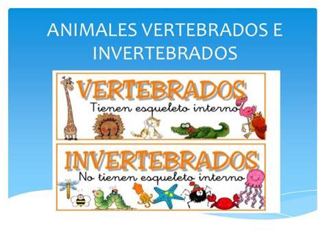 imagenes de animales inbertebrados animales vertebrados e invertebrados