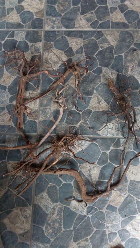 jual kayu aquascape akar rasamala  lapak herbalscape