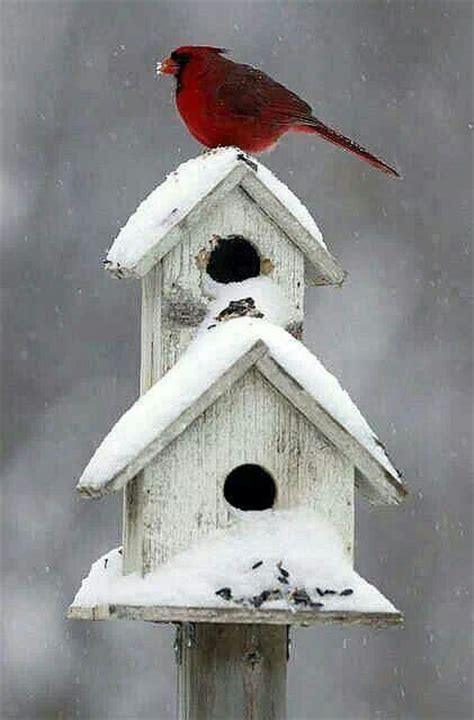 cardinal bird house winter bird house cardinal birdhouses pinterest