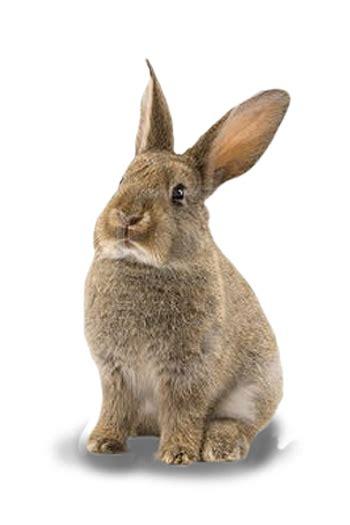 Gantungan Bunny Kopenhagen Bunny 1 bunny contact us
