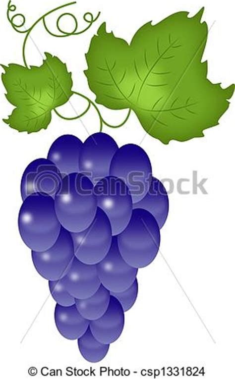 imagenes de uvas a color tekening van witte druiven blue druiven vrijstaand op