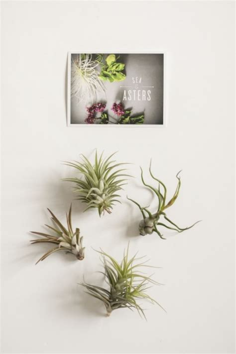 diy air plant holder easy as d i y floral wire air plant holder green diy