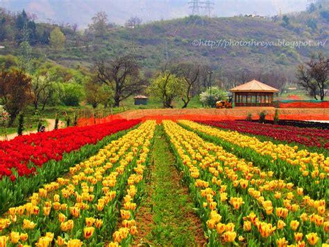gambar  foto taman bunga indah cantik dunia inilah