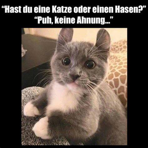 Katzen Meme - die 25 besten ideen zu lustige katzen auf pinterest