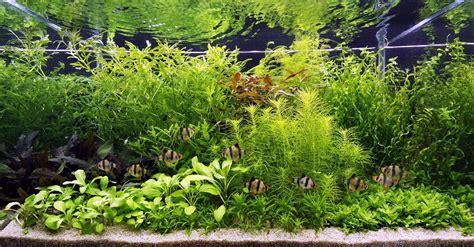 setting aquascape unterwasser landschaft holland aquarium f 252 r ein 200 liter