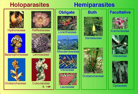 non parasitic agents of plant disease terms list