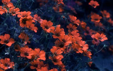 immagini per desktop fiori sfondi fiori 68 immagini