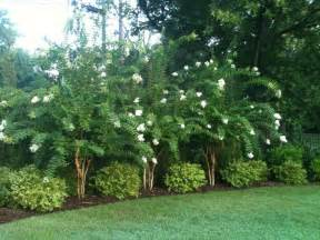 Pavers In Backyard Best 25 Natural Privacy Fences Ideas On Pinterest