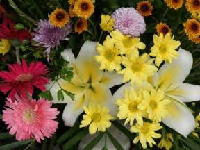 beautiful flower wallpapers hd funawake com