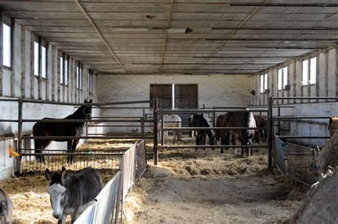 kleiner stall kleiner stall reiterhof z 246 then im schullandheim im