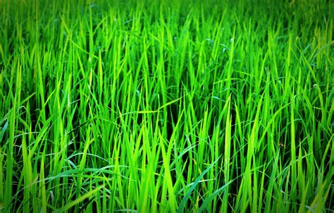 Green Grass green grass 183 free stock photo