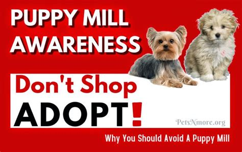 puppy mill facts pets n more why you should avoid puppy mills