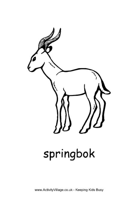 coloring pages springbok pin springbok coloring page on
