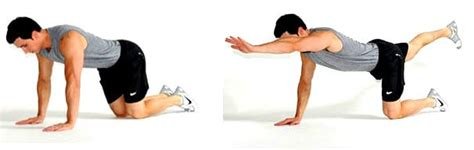 bird dogs workout 3 bird exercise variations photos builtlean