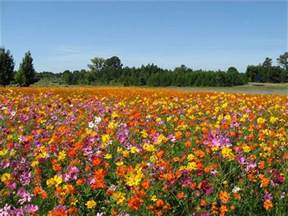Flowers South Bend Indiana - wildflowers provide incredible panorama of color tbo com