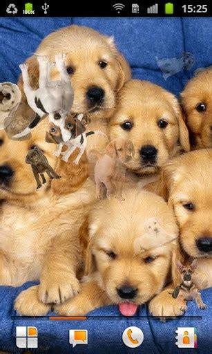 puppies live wallpaper welpen live hintergrund app f 252 r android