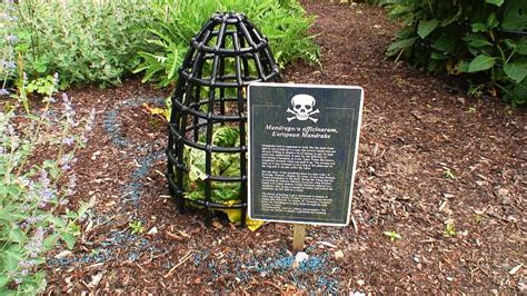 Poisonous Garden Plants by Poison Garden Languages Communication And Travel At