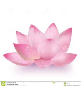 Realistic Lotus Flower Photo Realistic Lotus Flower Royalty Vrije Stock
